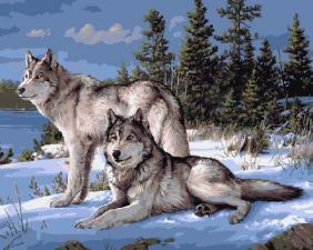 Картина по номерам 40Х50см Волки.