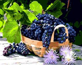 Картина по номерам 40*50 Виноград в корзинке.